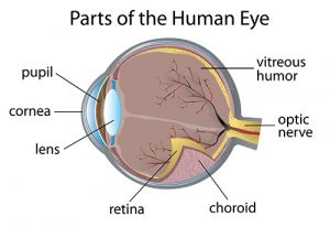 Eye Vitreous Clinical Trial